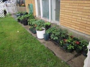 Gardening in pots.