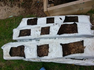 The coconut coir in the used bags from the greenhouse.