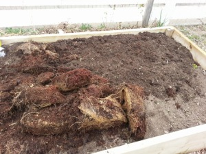 The coir, some worked into the soil and some not.